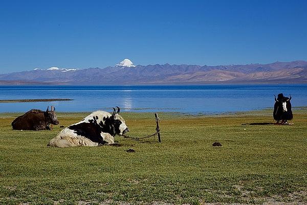 elevation_Kailash-Manasarovar_wiki
